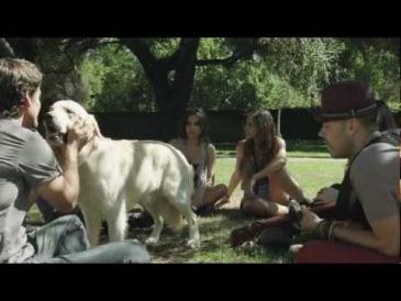 Con Quién Se Queda El Perro