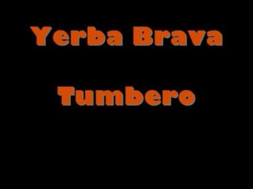 Tumbero
